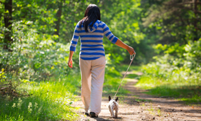 $112 for 1 Month of Dog Walking (2 Days a...