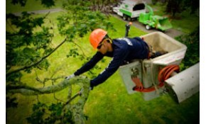 $199 for $400 Credit Towards Tree Service
