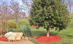 $541 for 750 Square Feet of Premium Mulch...