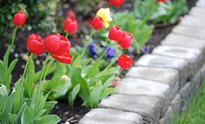$295 for 100 Spring Blooming Bulbs Planted