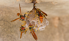 $150 for Wasp Nest Removal