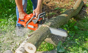 $270 for Four Labor-Hours of Tree Service