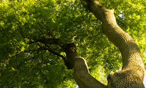 $240 for Four Labor-Hours of Tree Service