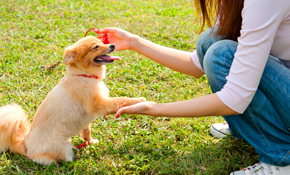 $161 for One Week of Dog Boarding Services