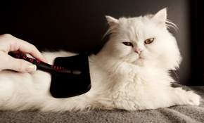 $52 for Feline Long Hair Grooming