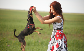 $550 for $575 Credit Toward Any Dog Training...