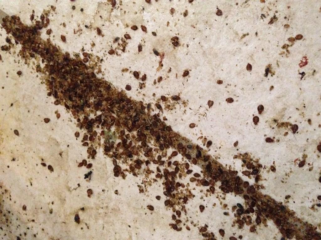 Bed Bugs Phoenix Arizona Heat Pest Services Phoenix Az 85086 Angies List
