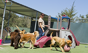 $14 Club Canine Group Play Session