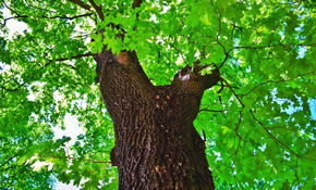 $50 Arborist Consultation and $50 Tree Service...