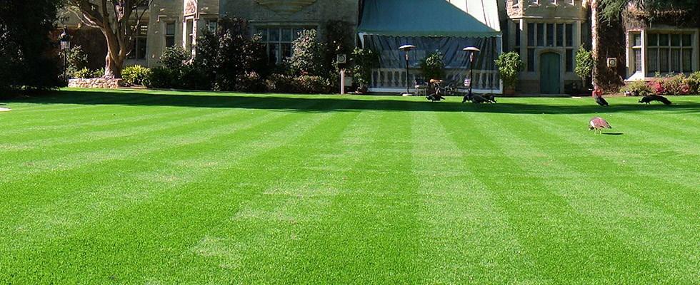Arizona Luxury Lawns Amp Putting Greens Scottsdale Az