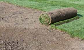 $1,600 for 900 Square Feet of Fresh Sod Installed