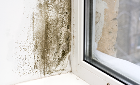 $100 for $200 Credit Toward Mold Damage Remediation