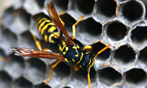 $125 for Wasp Nest Removal
