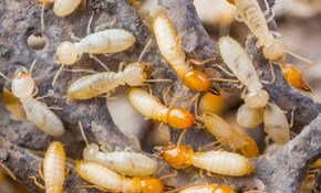 $100 for $200 Credit Toward Termite Services