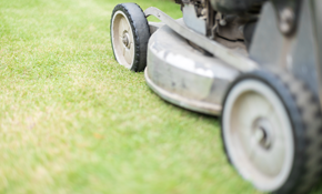 $55 for Lawn Mowing and Grooming