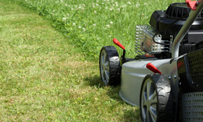 $79 for Lawn Mowing and Grooming