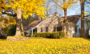$2,250 Leaf Removal and Gutter Cleaning