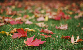 $175 for Four Hours of Fall Yard Clean-Up