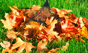 $225 for Four Hours of Fall Yard Clean-up