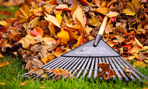 $299 for 8 Hours of Fall Lawn Clean-Up and...