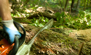$1499 for 3 Tree Service Professionals for...