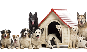$38 for 1 Night of Dog Boarding with Credit...