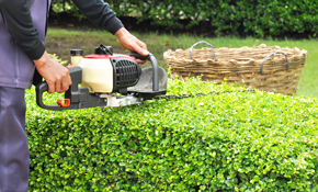 $299 for Eight Hours of Fall Yard Clean-up,...