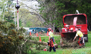 $799 for 3 Tree Service Professionals for...