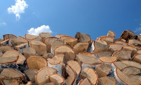 $165 for 1/2 Cord of Seasoned Firewood