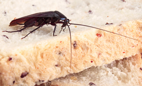 $340 for Annual Pest Control Package
