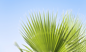 $79 for Fertilization Of Up To 7 Palm Trees