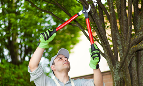 $460 for Half Day of Tree Service