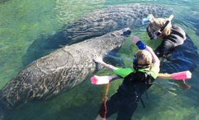 $198 for All-Inclusive Manatee Swim And Snorkel...