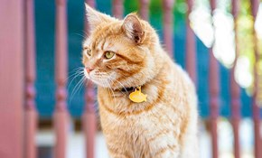 $40 for Three Days of In-Home Cat Care