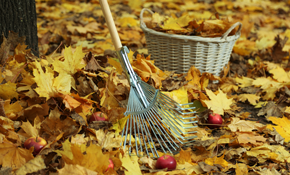 $567 for Seven Hours of Fall Lawn Cleanup