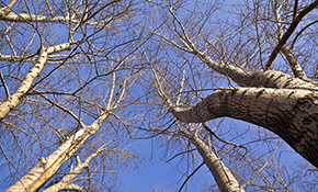 $149 to Clear Hazardous Tree Limbs from your...