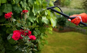 $75 for Initial Tree and Shrub Treatment