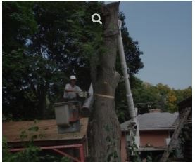 Brown Tree Service Inc Mount Prospect Il 60056 Angies