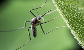 $595 for 1 Year of Mosquito Prevention with...