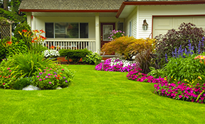 $350 for 6 yards of Mulch and Cleanup