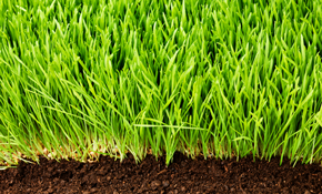 $123 for Three Lawn Care Applications, with...