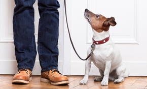 $30 for Two 30 Minute Dog Walking Sessions