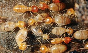 $105 for Termite Protection Package