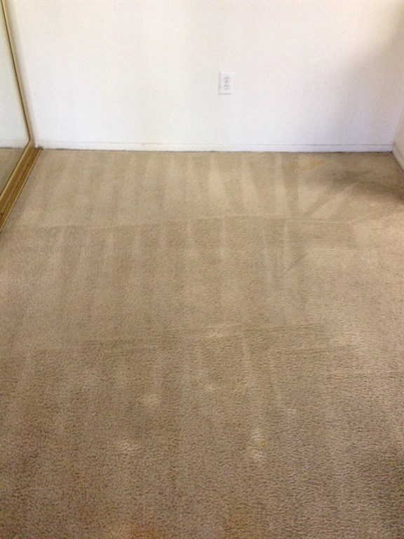 Florida Carpet Cleaning 28 Images