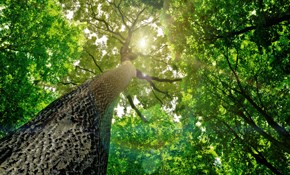 $1,550 for 4 Tree Service Professionals for...