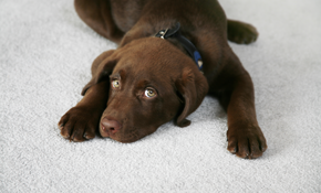 $220 for Eco-Friendly Carpet Cleaning Including...