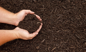 $295 for 750 Square Feet of Premium Mulch...