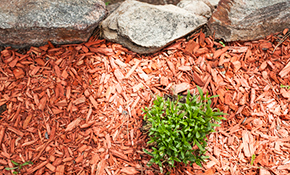 $500 for 4 Cubic Yards of Premium Mulch