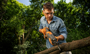 $2,200 Tree Service for a Day