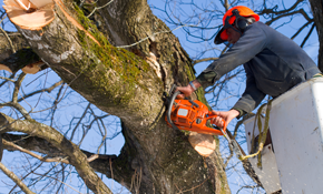 $1,600 for Four Hours of Tree Service